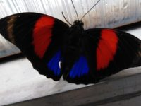 Výstava motýlů 3.C
